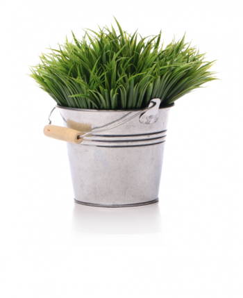 plant-on-a-bucket